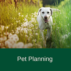 Pet-Planning